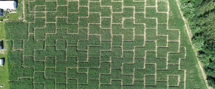 Zielony labirynt w Nieporęcie