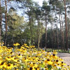 Park leśny Rembelszczyzna